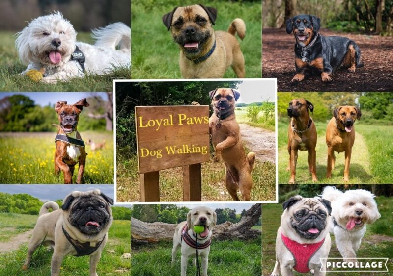 Loyal paws pet care service dog walking service Offering a pet care service in Cheam
