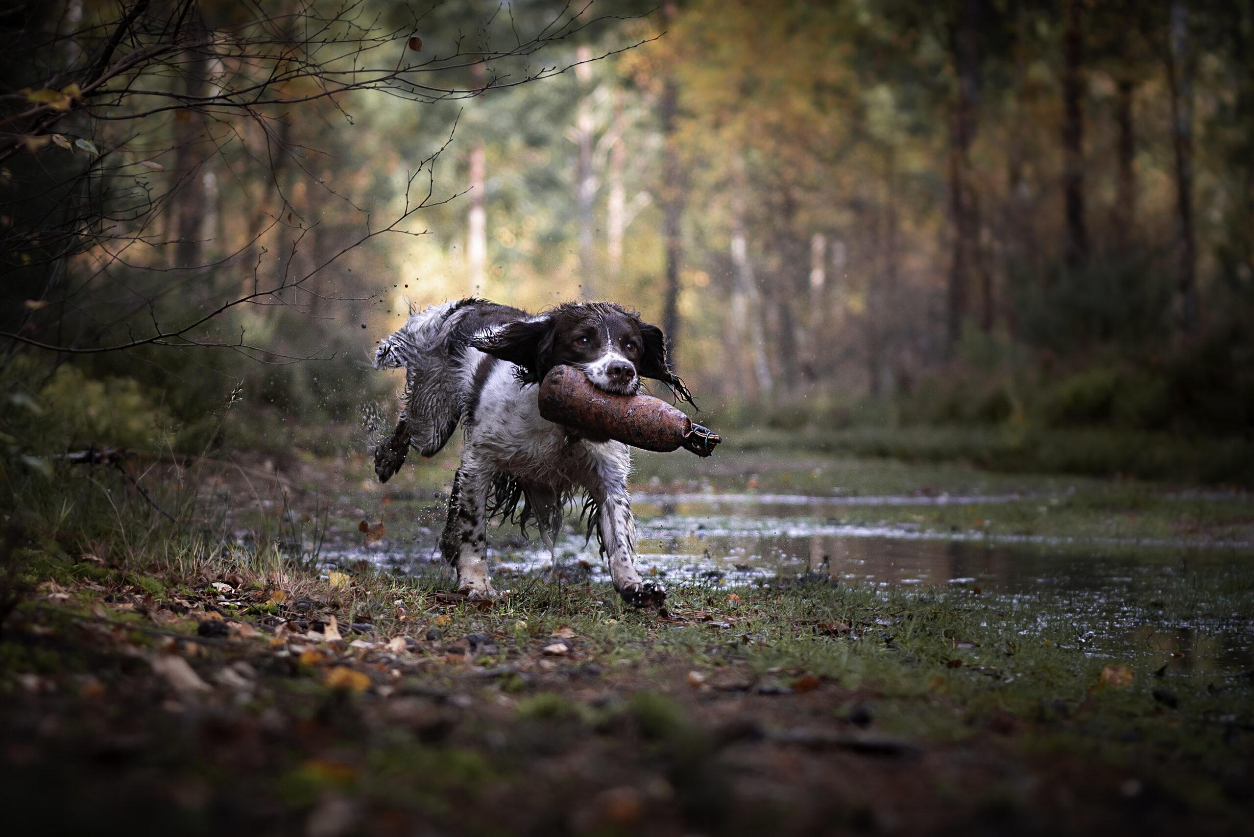 dog photography, pet photoshoot, dog photographer