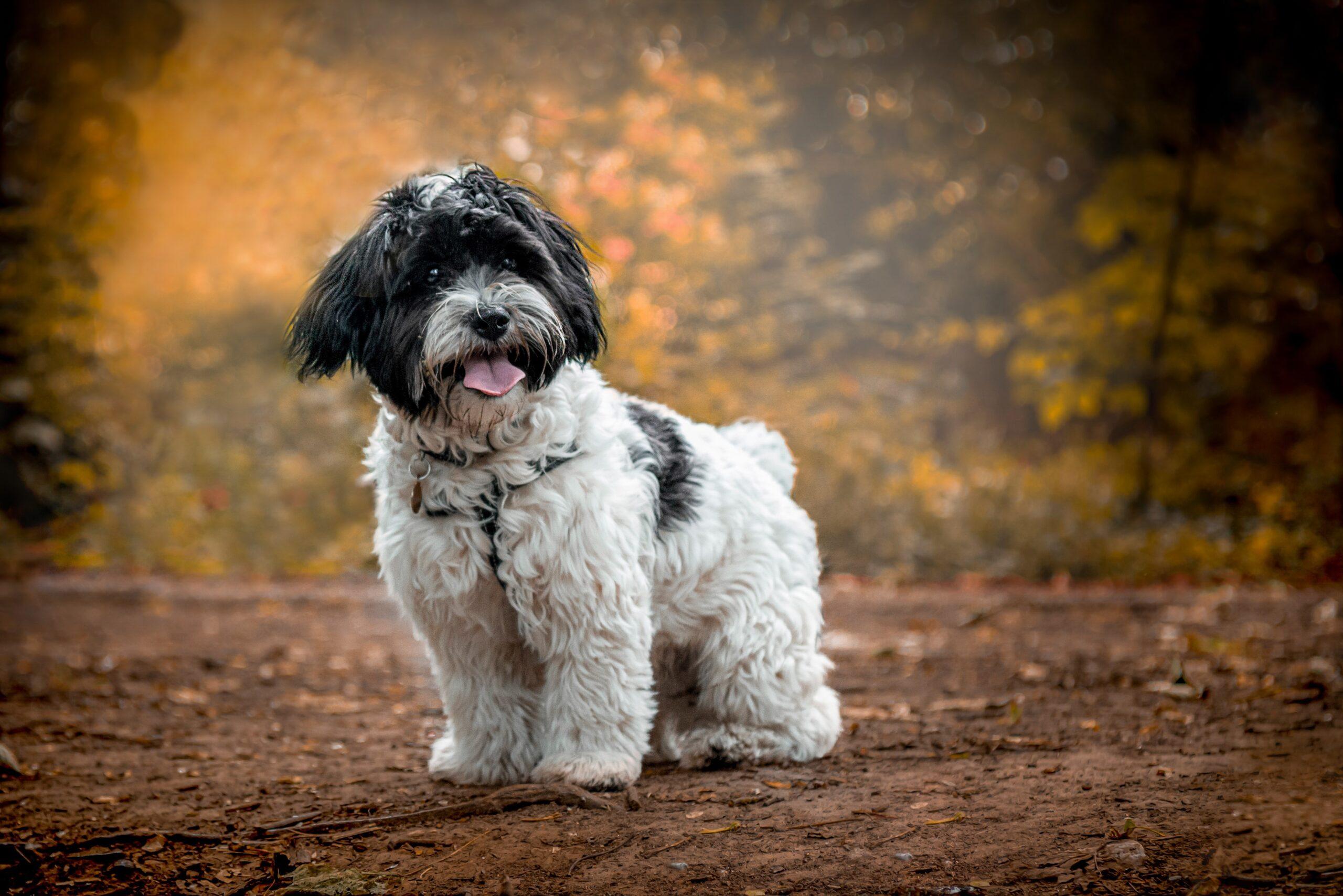 Puppy Photographer