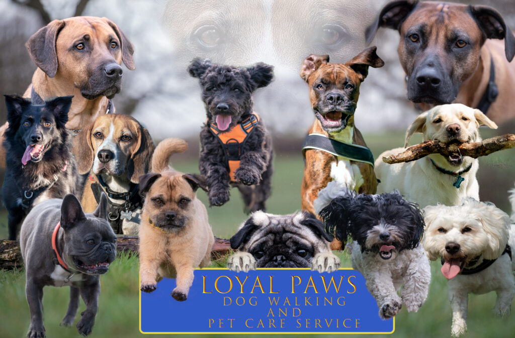 loyal paws service