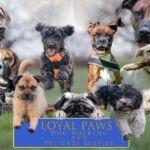 Loyal Paws